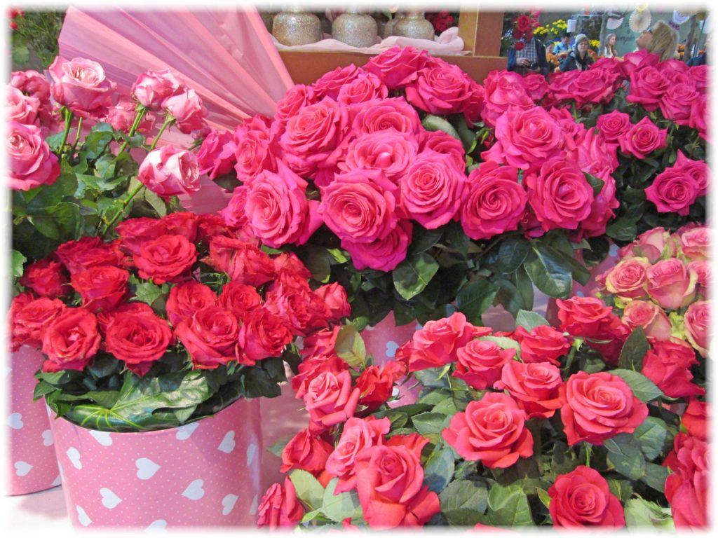 キューケンホフ展示のバラ