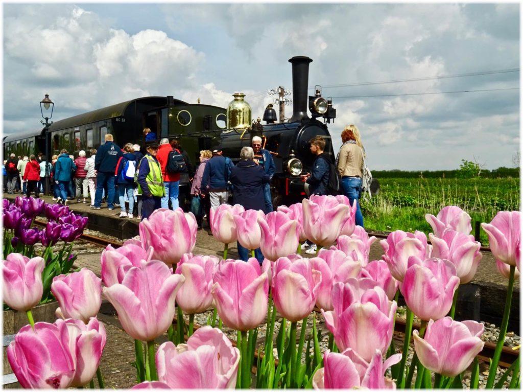 蒸気機関車でチューリップ畑を眺める旅