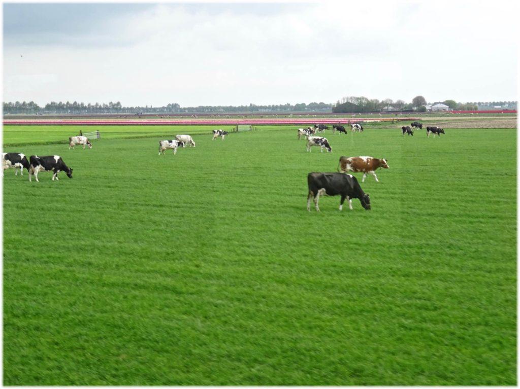 田園地の風景