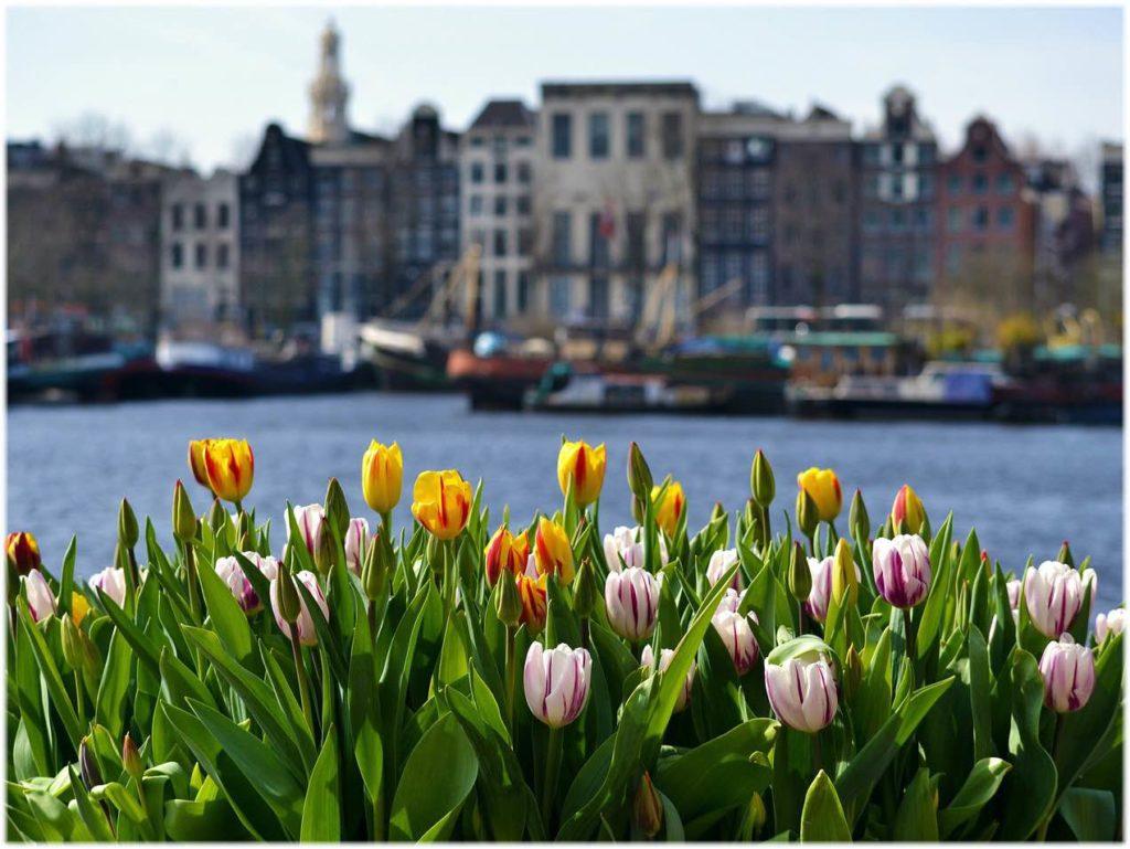 アムステルダムのチューリップ