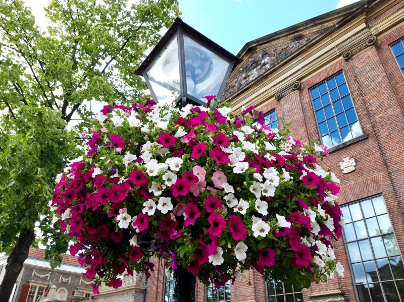 博物館前の街灯の花