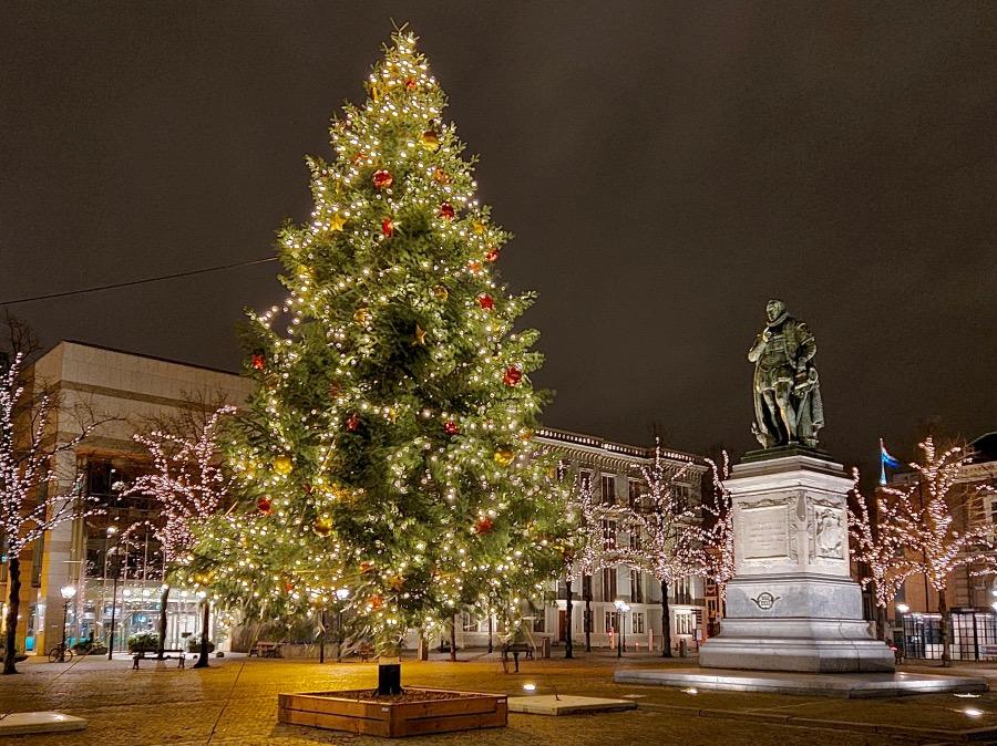 デンハーグの広場にあるツリー