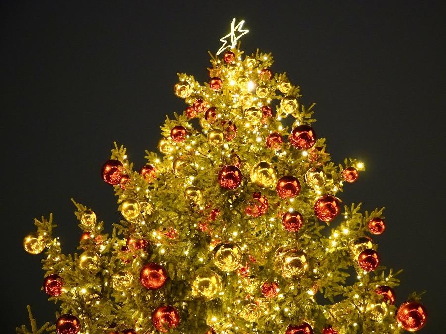 ゴーダのクリスマスツリー