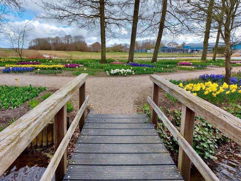庭園にある橋